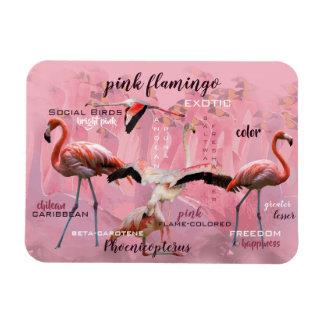 Pink Flamingo Typography   Customized Magnet