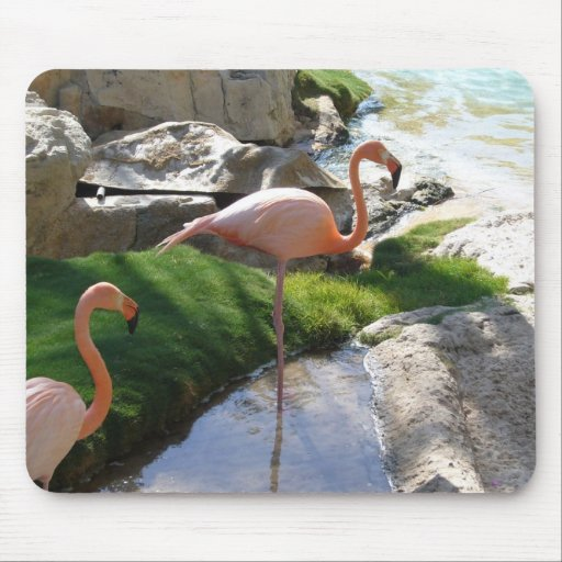 Pink Flamingoes Mouse Pad