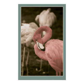 Pink Flamingoes Poster