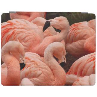Pink flamingos iPad smart cover
