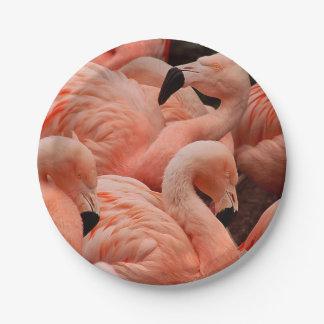 Pink flamingos paper plate