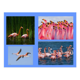 pink flamingos post card