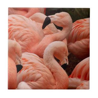 Pink flamingos tile