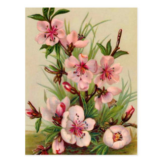 Pink Floral Arrangement Postcard