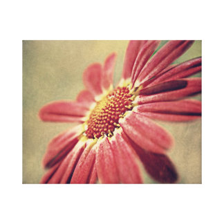 Pink Floral Daisy. Canvas Prints
