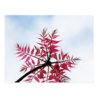 Pink Floral Design Art Glow Gradient Digital Art L Postcard