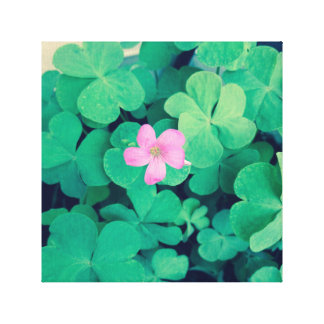 Pink Flower Bloom on Clovers Canvas Print