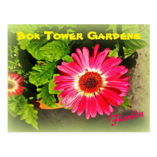 Pink Flower Bok Tower Gardens Lake Wales Florida Postcard