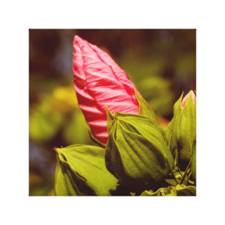 Pink Flower Bud Floral Garden Photo Single Canvas Print