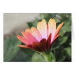 Pink Flower Cards