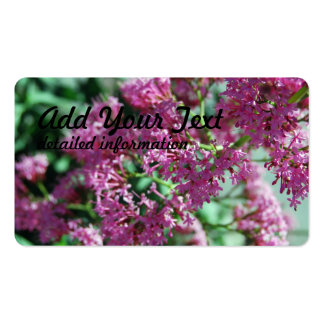 Pink Flower Close Up Pack Of Standard Business Cards