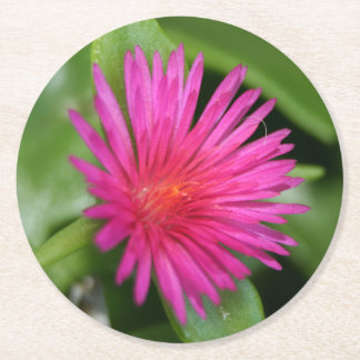 Pink Flower of Succulent Carpet Weed Round Paper Coaster