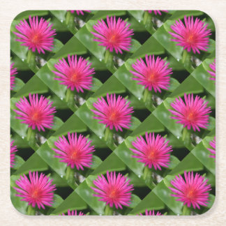 Pink Flower of Succulent Carpet Weed Square Paper Coaster