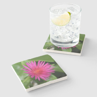 Pink Flower of Succulent Carpet Weed Stone Coaster