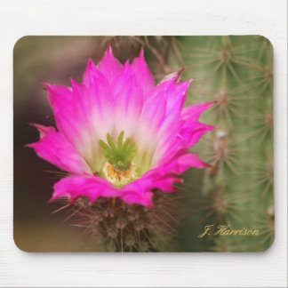 Pink Flower on Cacti Mouse Pad