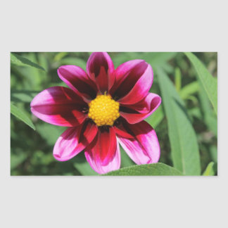 Pink Flower Photography Garden Sticker