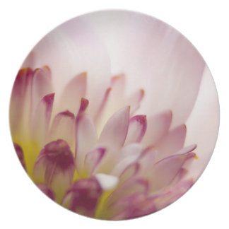 Pink Flower Photography Party Plate