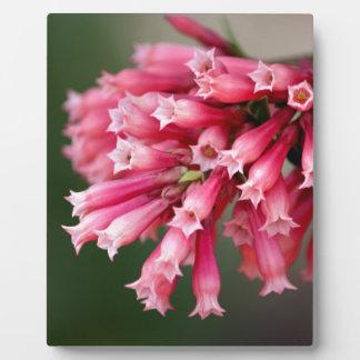 Pink Flower Plaque