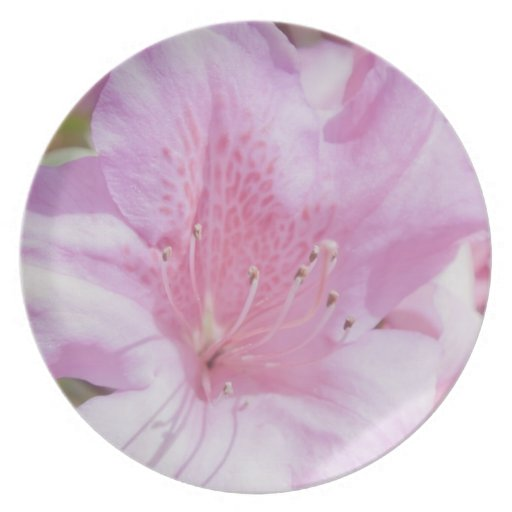 Pink Flower Party Plates