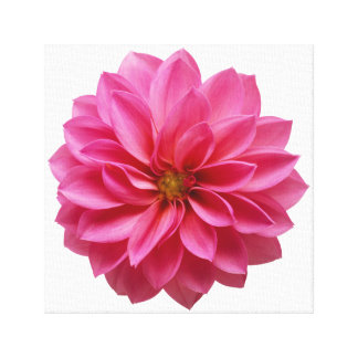 Pink Flower Stretched Canvas Print