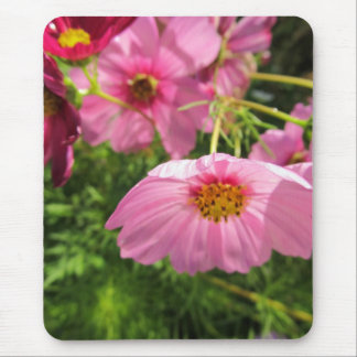 Pink Flower the Garden cosmos Mouse Pad