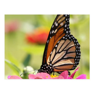 Pink flower with monarch butterfly post card