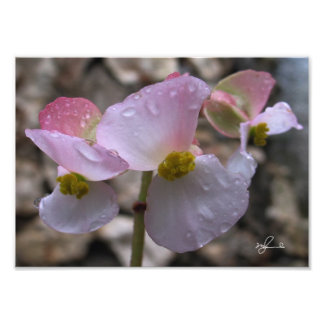Pink Flower with Rain Drops Photo Print