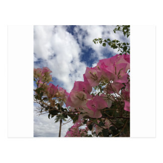 pink flowers against a blue sky postcard