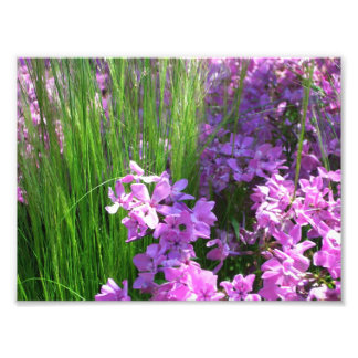 Pink Flowers and Grass Photo Print