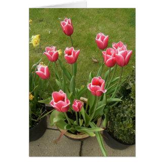 Pink Flowers Blank Greeting Card