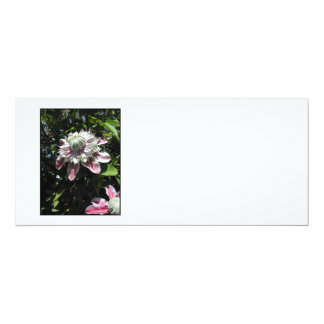 Pink flowers. Clematis. Stylish design. 10 Cm X 24 Cm Invitation Card