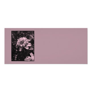 Pink flowers. Clematis. Stylish design. Announcements