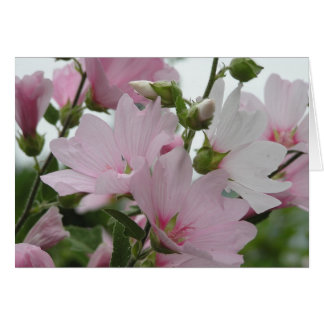 Pink Flowers Impatiens Family Card