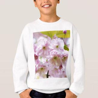 Pink flowers on Japanese cherry tree in city garde Sweatshirt