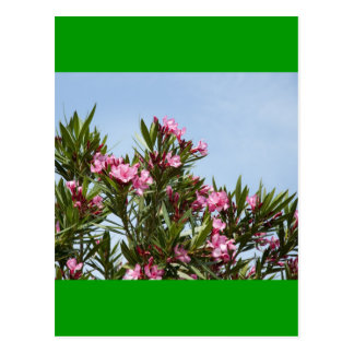 Pink flowers with a blue sky postcard