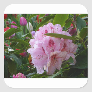 pink flowers with dew square sticker