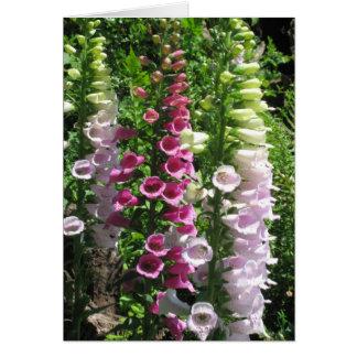 Pink Foxgloves Card
