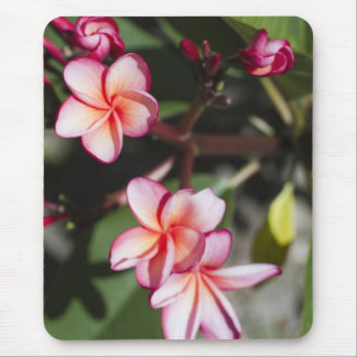 Pink Frangipani Flowers Mouse Pad