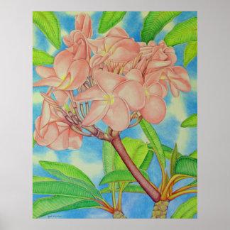 Pink Frangipani Poster