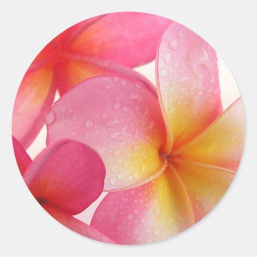 Pink Frangipani Stickers