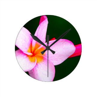 Pink Frangipani Wall Clocks