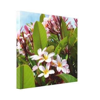 Pink Frangipanis Growing On A Tree, Canvas Print