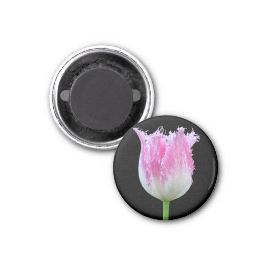 Pink Fringed Tulip Magnet