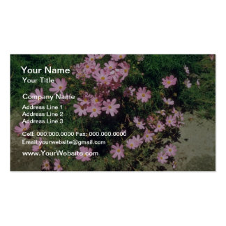 Pink Garden Cosmos (Cosmos Bipinnatus) flowers Business Cards