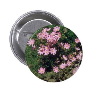 Pink Garden Cosmos Cosmos Bipinnatus flowers Pin