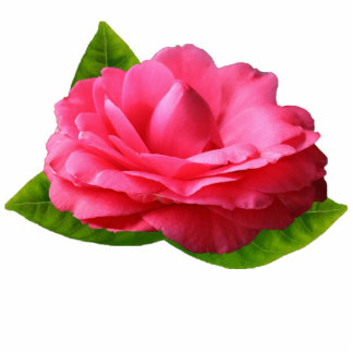 Pink Gardenia Magnet Photo Sculpture