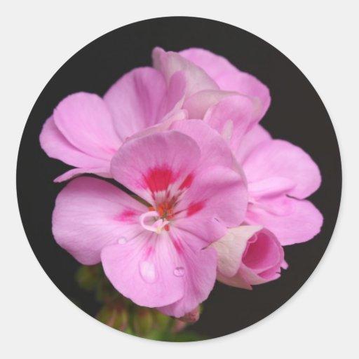 Pink geranium floral bouquet in bloom sticker
