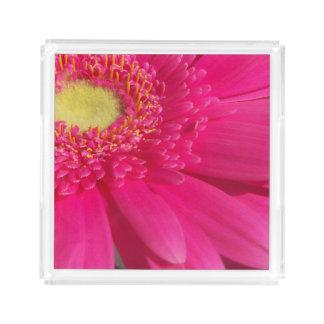 Pink Gerber Daisy Acrylic Tray