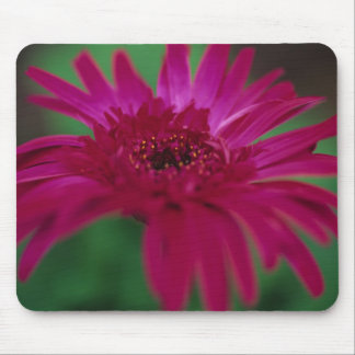 Pink Gerber Daisy Mouse Pad
