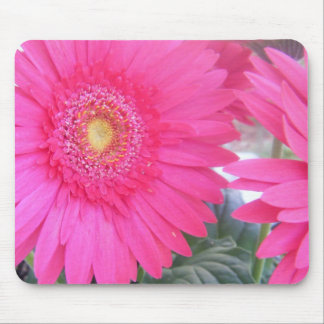 Pink Gerber Daisy Mouse Pads